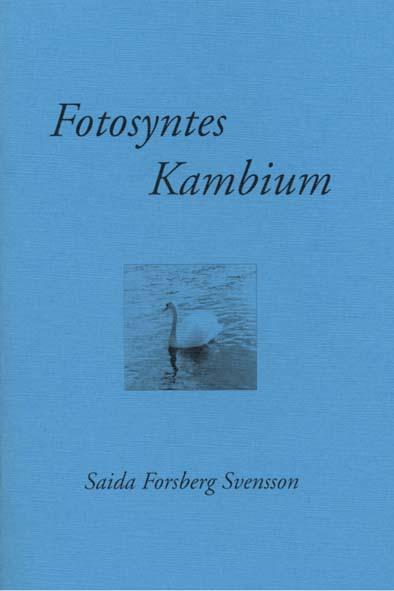 Fotosyntes Kambium